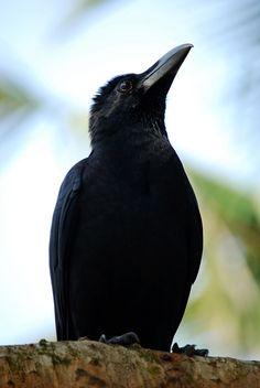 night talk chat line Cincinnati, raven chat line Edmond,