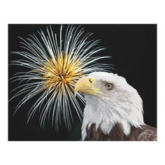 Customizable #American #Animal #Aviary #Bald#Eagle #Beak #Bird #Birds #Birds#Of#Prey #Carrion #Celebration #Debbie#Quick #Debs#Creative#Images #Eagle #Eyes #Feathers #Fireworks #Fourth#Of#July #Independence#Day #Large #Majestic #New#York #Outdoor #Patriotic #Portrait #Power #Predatory #Prey #Pride #Raptor #Sky #Strength #Symbolic #Talons #The#Hudson#Valley #Wild #Wildlife #Wings Bald Eagle and Fireworks Canvas Print available WorldWide on http://bit.ly/2fqH0Xk