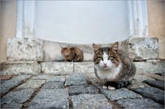 Special agents on a mission | cat