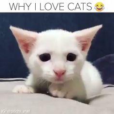 #rthdayfunny #funnycatsvideos #cutecatdiys #cattatto #catvideos #cutecatvideos #sillycatvideos #bestcatvideos #bengalscat #exoticcat