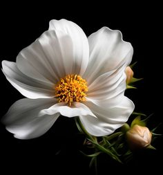 (notitle) The post appeared first on Fotografie. Flowers Nature, Exotic Flowers, Tropical Flowers, Fresh Flowers, Pretty Flowers, White Flowers, Flower Images, Flower Photos, Flower Art