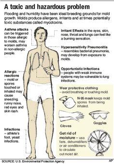 #Mold - A Toxic and Hazardous Problem