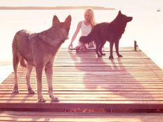 Naturvölker in aller Welt glaubten, dass ihnen die Geister der Tiere Schutz, Rat und Heilung bieten. Auch wir können von unserem Kraft-