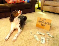 The post Funny Dog Shaming 152 appeared first on Fit for Fun.