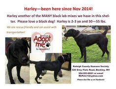 Harley~ HUMANE SOCIETY of RALEIGH COUNTY 325 Gray Flats Rd Beckley WV 25802 rcpets@hotmail.com P 304-253-8921