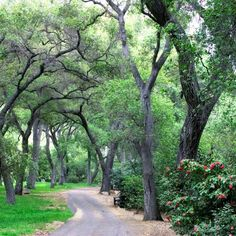 The Oak Forest at Descanso gardens
