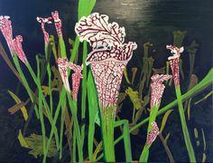 Pitcher Plants: Sarracenia leucophylla Raf by Jesse Waugh — Jesse Waugh Woodcut Tattoo, Pitcher Plant, Carnivorous Plants, Vertebrates, Science And Nature, Mammals, Oil On Canvas, Exotic, Geek Stuff