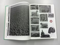Batia Suter - Parallel Encyclopedia