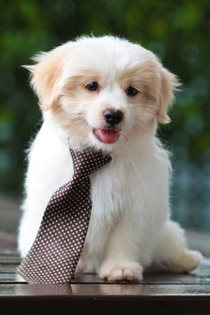 And as long as I got my suit and tie. . . (Justin Timberlake, anyone?) #PuppyLove