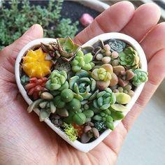 Succulents in a cute heart.
