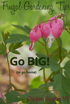 gardening tips - Google Search