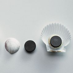 Collect shells on the beach (or at a craft store) to make unique home accents.