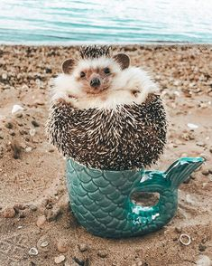 pokee ~ the little Merman Baby Animals Pictures, Cute Animal Photos, Cute Animal Videos, Super Cute Animals, Cute Funny Animals, Cute Baby Animals, Cut Animals, Animals And Pets, Baby Hedgehog