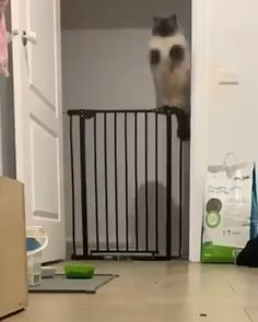 Pro Tip: Get 2 gates and stack 'em. As long as they can't squeeze through the slats you should be good. Pro Tip: Get 2 gates and stack 'em. As long as they can't squeeze through the slats you should be good. Funny Animal Memes, Funny Cat Videos, Cute Funny Animals, Funny Animal Pictures, Cute Baby Animals, Cat Memes, Funny Cute, Cute Cats, Farm Pictures