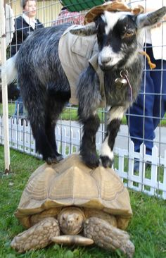 All God's Creatures Petting Zoo, Pony Rides, Miniature Horse Carriages, Princess Ponies