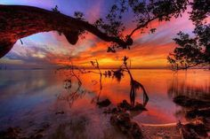 Mangroves at Sunset - Key Largo, Florida, by Daniel L. The ubiquitous Florida mangrove trees that grow along the shallow coastlines provide an interesting foreground for this beautiful sunset in Key Largo. Key Largo Florida, Florida Keys, Florida Usa, Florida Everglades, Fl Keys, West Florida, Beautiful Sunset, Beautiful World, Beautiful Places