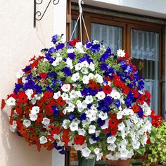 Hanging baskets in red, white & blue Surfinia Petunias Flowers Diy Planters, Hanging Planters, Planter Ideas, Fall Planters, Diy Hanging, Petunia Flower, Petunia Plant, White And Blue Flowers, Hanging Baskets
