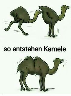 How Camels are made Funny Disney Memes, Crazy Funny Memes, Funny Animal Memes, Really Funny Memes, Stupid Funny Memes, Funny Cartoons, Funny Relatable Memes, Funny Animals, Funny Picture Jokes