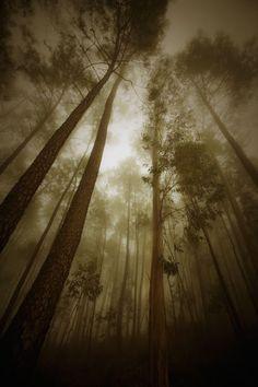 Laurence Pegard - Google+ Country Roads, Photography, Google, Woods, Scenery, Photograph, Fotografie, Photoshoot, Fotografia