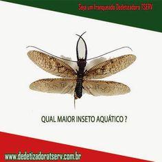 DEDETIZADORA TSERV : QUAL É O MAIOR INSETO AQUÁTICO ? www.dedetizadoratserv.com.br