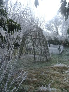 April frost on the willow house , 2008
