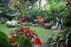pool plants Bali Garden, Balinese Garden, Diy Garden, Dream Garden, Small Tropical Gardens, Tropical Garden Design, Tropical Plants, Tropical Forest, Tropical Backyard Landscaping