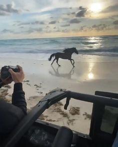 Most Beautiful Horses, Pretty Horses, Animal Photography, Nature Photography, Travel Photography, Horse Girl, Horse Love, Funny Animals, Cute Animals