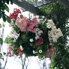Skip the store-bought hanging baskets and create your own! Flip through our gallery of hanging baskets that perfectly pair plants and blooms for a colorful mixture of flowers that you can proudly hang in your backyard or front porch. We've combined impatiens, begonias, annuals, and perennials for a beautiful combination of color.