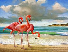 Flamingos on the Beach by R Christopher Vest