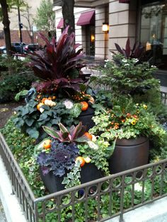 Container gardening in the city of Chicago
