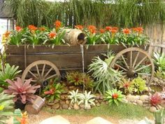 Dream State: Grow Your Own Ginger At Home! : Today I am going to teach you how to grow ginger in your own home! Garden Wagon, Garden Junk, Garden Pots, Rustic Garden Decor, Rustic Gardens, Outdoor Gardens, Wagon Planter, Shed Landscaping, Horse Drawn Wagon