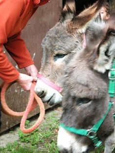 love donkeys...