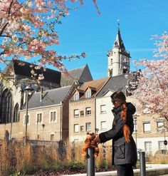 Blossoms in Amiens, France