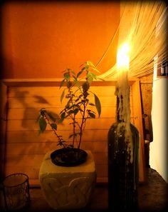 Under the Light ;)  @Restaurant Tipico