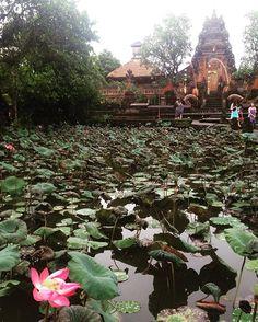 Fleur de lotus sous le ciel gris de Bali . . #ubud #ubudbali #bali #baliindonesia #indonesie #indonesia #wonderfulindonesia #voyage #voyager #travel #travelgram #aventure #adventure #igerbali #balimustdo #temple #asiesudest #indotravellers #backpacker #backpackerindonesia #beautifuldestination #indonesiaphotography #exploreindonesia #instatravellers #fleur