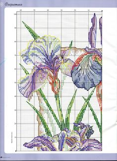 iris blu1