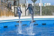 Gulfarium Marine Adventure Park Admission Tickets - TripShock! - $22