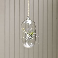 Hanging glass tube for airplants, $22 West Elm