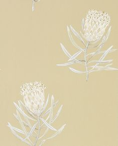Protea Flower Sepia / Champagne wallpaper by Sanderson Protea Flower, Flowers, Photo Mural, Watercolor Effects, Beige Background, Motif Design, Home Wallpaper, Pattern Wallpaper, Line Drawing