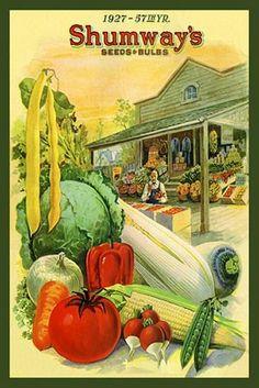 Vintage Seed Catalogue - 1927