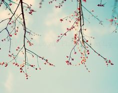 Red Buds - 11x14 Fine Art Nature Photography by KatieLloydPhoto, $ 35.00