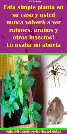 A constant inclusion on lists of Good To Know, Mosquitos, Ideas Para, Cleaning, Tips, House, Gardens, Home, Medicine