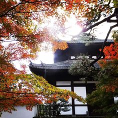Kofukuji Shrine Kyoto http://ift.tt/2eJMIDi #japan_daytime_view #nature_archive #phos_japan #ig_japan #bestjapanpics #icu_japan #bestjapanpics #gf_nature #wp_japan @icu_japan @japan_daytime_view @_photo_japan_  @art_of_japan @instagramjapan @wp_japan @japan_of_insta @lovers_nippon #nature_brilliance #ig_myshot #tv_nature #ig_color #rsa_nature #outdoors #bestnatureshots @team_jp @leaveonlyleaves @igersjp