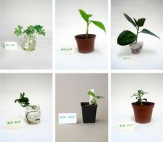 """What a neat idea. I certainly never thought of houseplants as """"vintage""""...and to trade them/learn from them is a fun concept. The Vintage Plant Project  Byggstudio"""