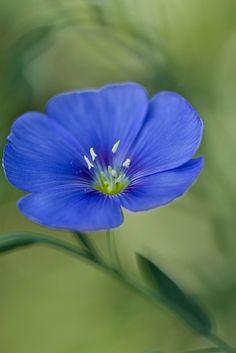 Flax | Flickr - Photo Sharing!