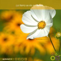 Buenas tardes!! La tierra se ríe en flores... @EdwardEstilinCummimgs  #naturaleza #tierra #world #infinitoe14 #flowers #live #communitymanager #cm #redessociales #life