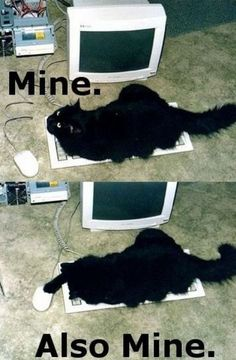 Funny Cats, mine does this all the time!