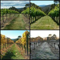 Our vineyard captured in 4 seasons #winterbrookvineyard