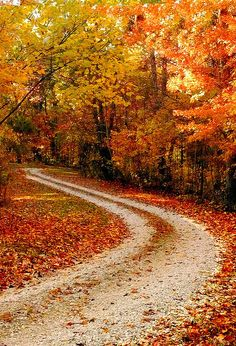 An enchantingly pretty autumn road - I so badly want to skip down in merrily :) #road #landscape #nature #photography #autumn #leaves #orange