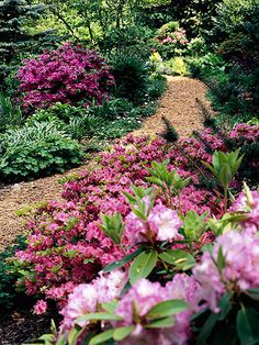 Use Flowering Shrubs We typically think of perennials such as hostas for shade gardens -- but don't forget about the wide selection of flowering shrubs to pack your shady spots with color, texture, and height. Here, a variety of azaleas and rhododendrons provide a big spring punch, and their evergreen foliage keeps the garden looking good in winter. Discover more shade-loving shrubs in Plant Encyclopedia.